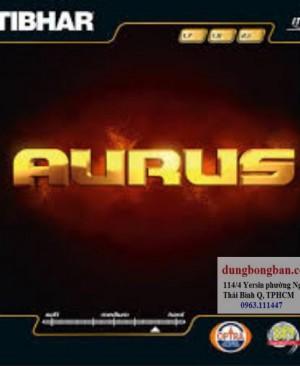 Tibhar-Aurus